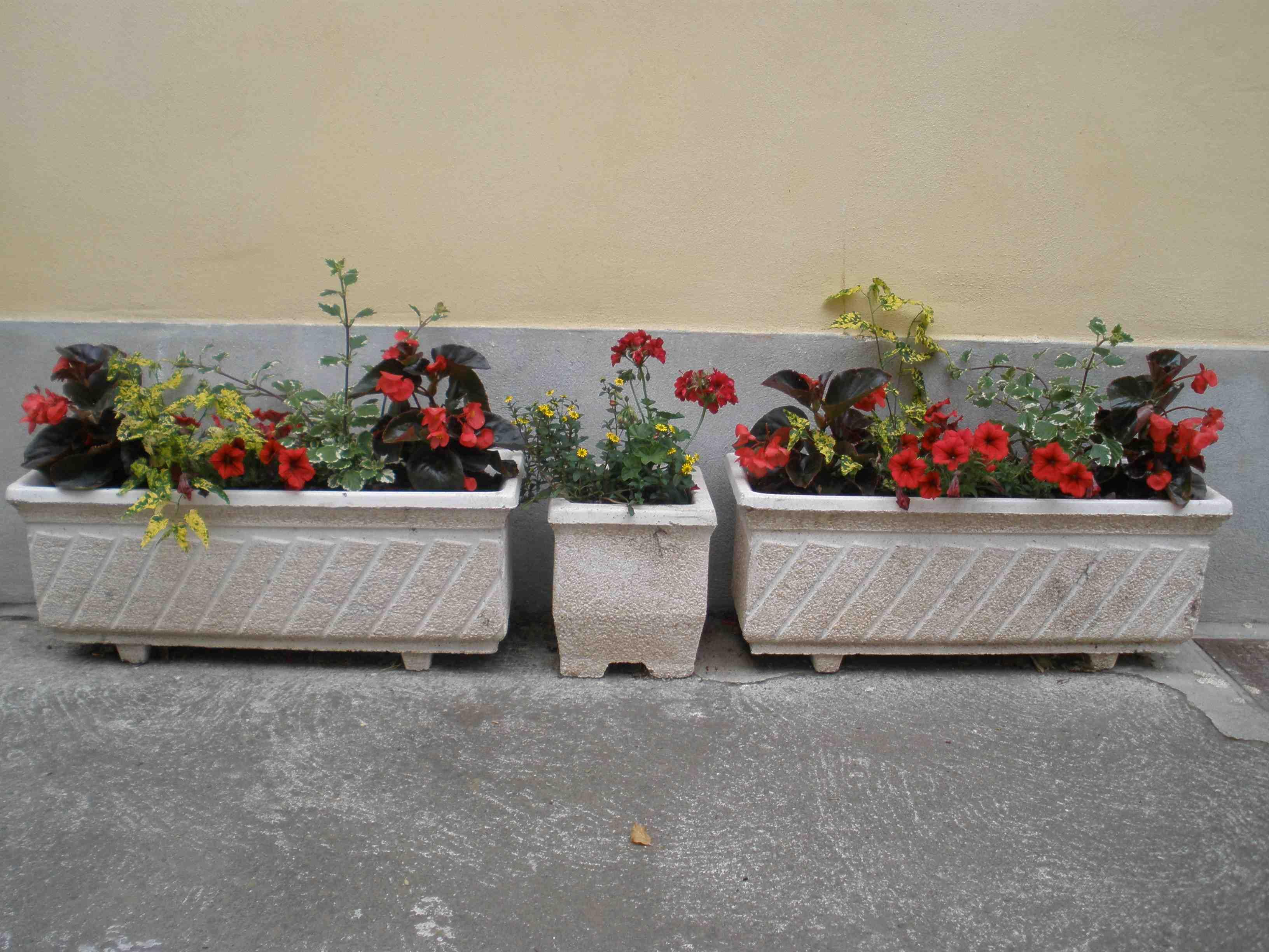 fleurissementhabitants41.jpg