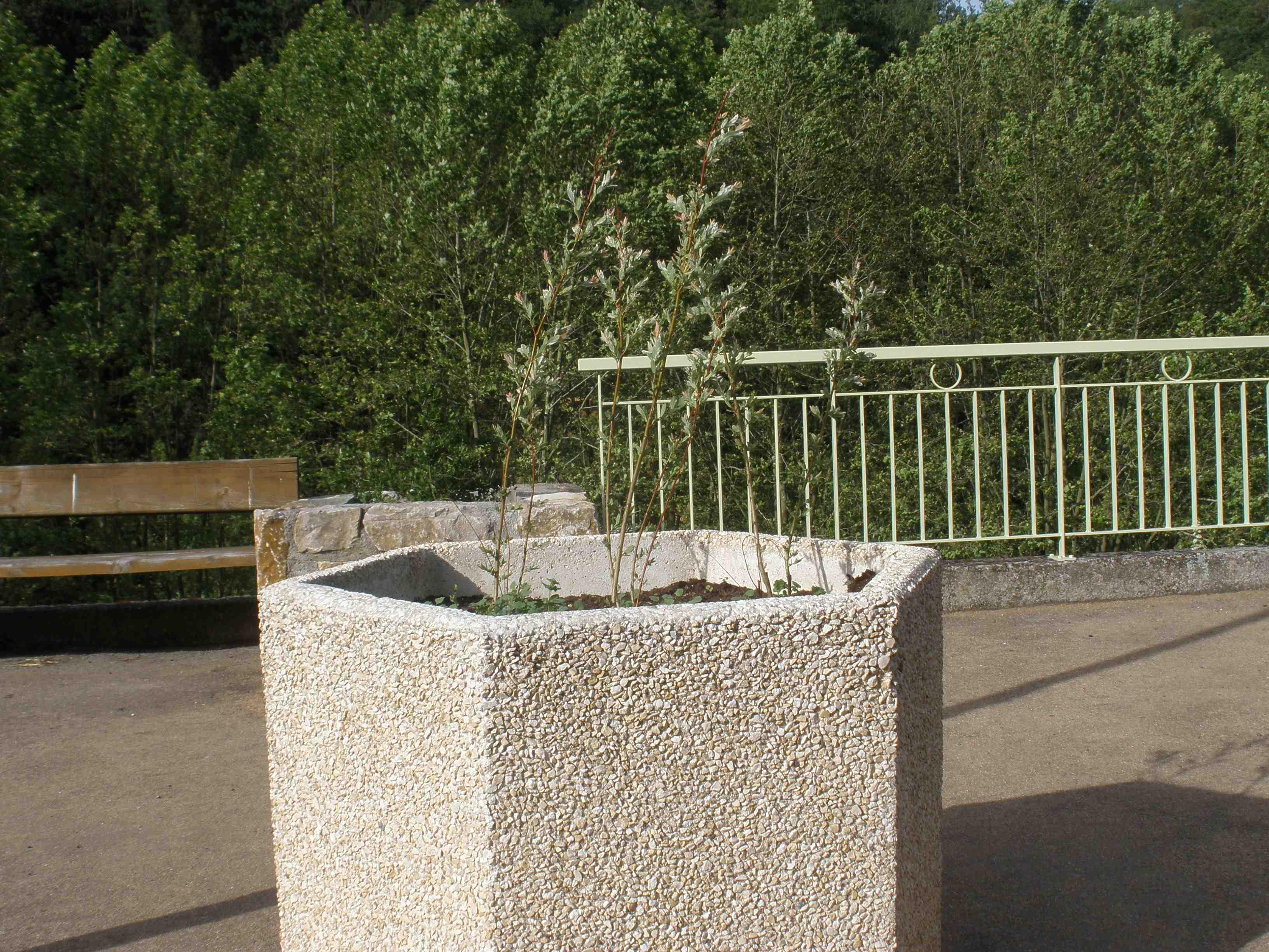 fleurissementrlb6.jpg